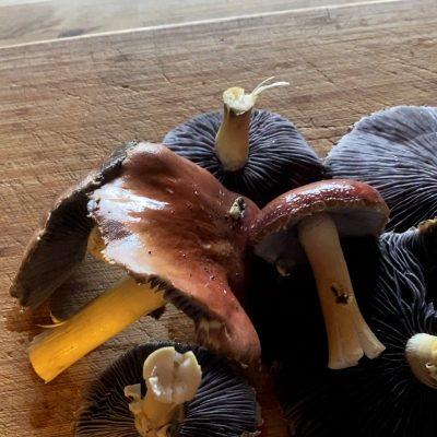 Turning Brush Into Mushrooms!